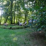 Picknick im schönen kühlen Wald