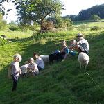 Abschluß bei den Schafen und ihren Lämmern
