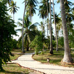 Barefoot island