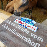 Holzschild bedruckt für Fotopoint Erlebnis Sennerei Zillertal, Tirol