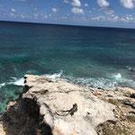 Leguane sonnen sich gerne auf den Felsen