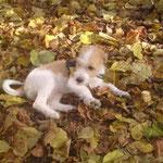 Arwen liebt den Herbst