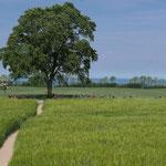 Weg zum Hünengtrab bei Mechelsdorf