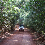 ...Regenwaldtracks sind atemberaubend schön!