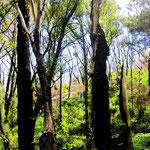 Regenwald in Südvictoria