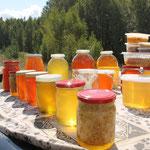 Frischer Honig schmeckt sensationell