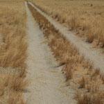 Eng und einspurig schlängelt sich die CSR durch die Wüste