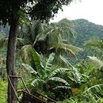 Paradisisches West-Bali
