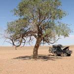 Ein Baum im Nichts der Wüste