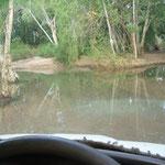 Harte Tracks im Bush.. habe mich Fern von den Hauptstrassen gehalten...
