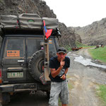 Wildpferde in der Südmongolei