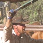 In den Yards (hier werden alle Kühe zusammengetrieben und bearbeitet) ;-)