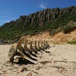 ..Strand ohne namen im Narawntapu National Park