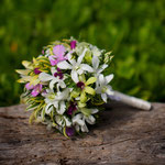 Maylea: Wildflower