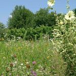Blumenwiese beim Merlot