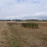 Criquetot sur Longueville