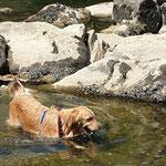 Hundespazierdienst, Spiel und Spass, Kundenhunde, Hundebetreuung, Hundeferienplatz, Sandra Kähr, Birsfelden, Baselland, Birseck, Schweiz