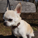 Hundespazierdienst, Spiel und Spass, Kundenhunde, Hundebetreuung, Hundeferienplatz, Sandra Kähr, Basel, Birsfelden, Baselland, Birseck, Schweiz
