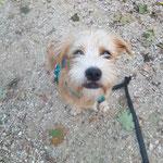 Hundespazierdienst, Spiel und Spass, Kundenhunde, Hundebetreuung, Hundeferienplatz, Sandra Kähr  Region Birseck Basel  Basellandschaft