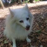 Hundespazierdienst, Spiel und Spass, Kundenhunde, hundebetreuung, Hundeferienplatz, Sandra Kähr Region Birseck Basel Baselland