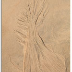 l'arbre à sable  TA N° 3 bis