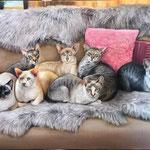 Katzen handgemalt