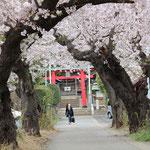 1-3-5.川和の八幡神社の参道