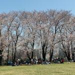 03.中川連合町内会 中川八幡山公園