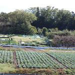 1-2-2.農業専用地区の市民農園