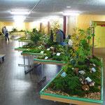 177 Pilzarten wurden naturgetreu gezeigt.