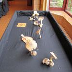 An einem separaten Tisch wurden besonders giftige Pilze vorgestellt.