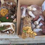 …. Vielfalt an Pilzen zu sammeln.