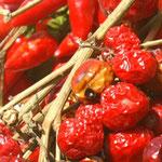 Chili-Peperoncino, pikantes Kalabrien