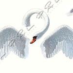 """Annons illustration för att introducera """"Svan-märket"""""""