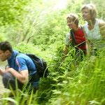 Echte Natur erleben für die ganze Familie im Naturpark Attersee-Traunsee