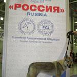"""""""Россия-1"""" 2011г. Асти-1 место. Лучший Представитель Породы."""