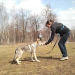 Аирвльф на площадке для собак. 4 мес. Учимся одевать намордник.