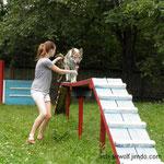Аирвльф на площадке для собак. 7 мес.