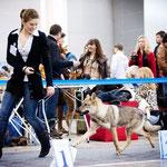 Ари на выставке Евразия-1.Лучший щенок. 6 мес.