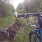 Велопрогулки с влчаком Арнольд