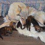 Асти с щенками :)