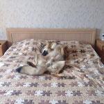 после прогулочки Арька - уставший и счастливый влчак)))
