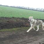 Грейт тренируется в полях.