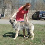 Бренджи 6 мес. на выставке завоевал  CW,ЛЩ, Очень перспективный, ВОВ