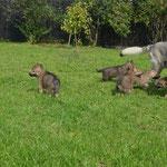 Счастливая мама Асти с щенками