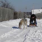 Влчак может покатать с ветерком :)