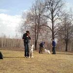 Аирвльф на площадке для собак. 4 мес.