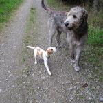 Chevy und ein irischer Wolfshund