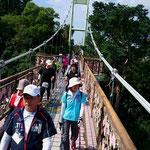 名護城公園の隠れた名所、桜橋!!