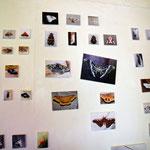 昆虫たちの写真の展示も沢山あります。虫好きにはたまりません。